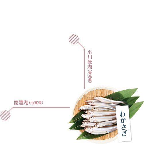 わかさぎ 小川原湖(青森県) 琵琶湖(滋賀県)
